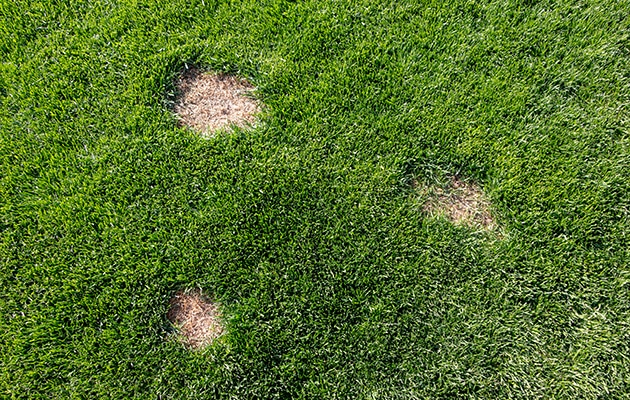 North Oakland County Lawn Disease